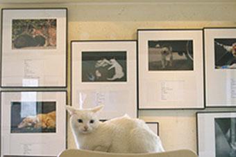 中川こうじ写真展「のらねこ。」は終了いたしました。_f0138928_18404434.jpg