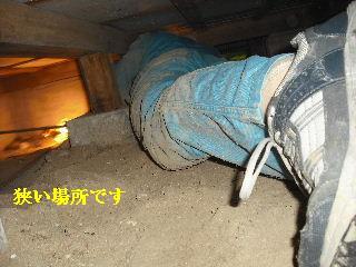 防虫作業・浴室関連作業_f0031037_1946797.jpg