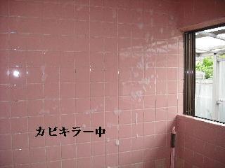 防虫作業・浴室関連作業_f0031037_19494445.jpg
