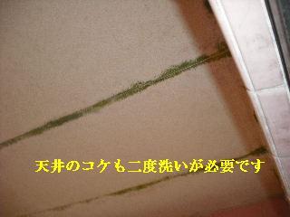 防虫作業・浴室関連作業_f0031037_19495655.jpg