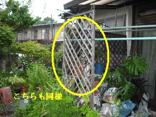 防虫作業・浴室関連作業_f0031037_19543930.jpg