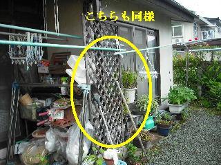 防虫作業・浴室関連作業_f0031037_1955515.jpg