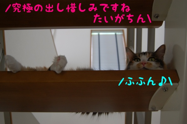 c0181639_16561147.jpg