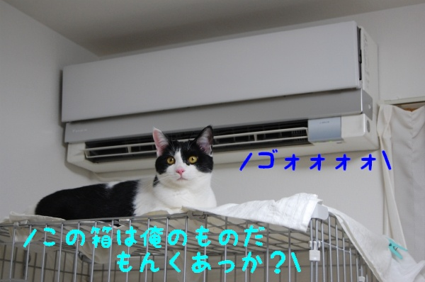 c0181639_16564019.jpg