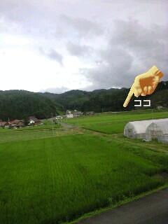 緑のじゅうたん_f0071456_21284384.jpg
