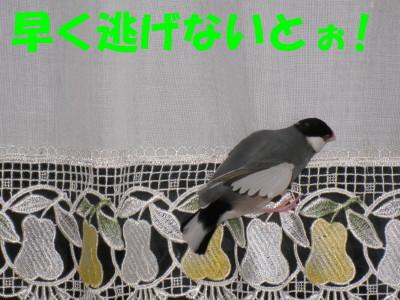 b0158061_2157127.jpg