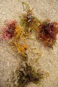 ユキちゃんが見つけた海の色_f0106597_23391343.jpg