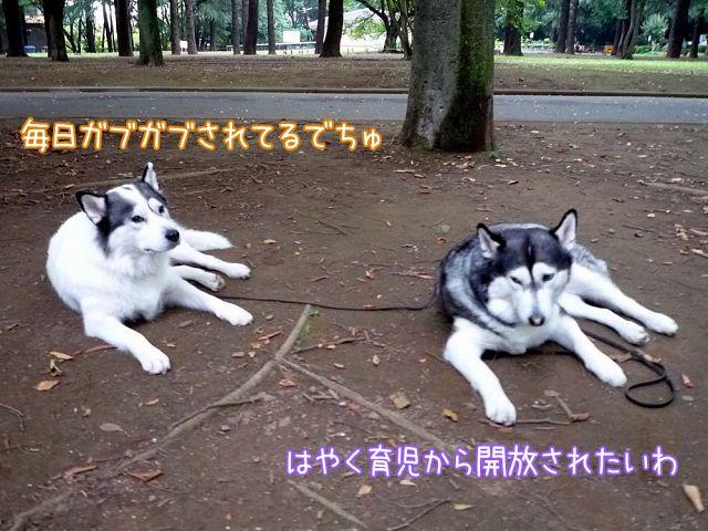 土曜日だよ!おっきな公園_c0062832_18163216.jpg