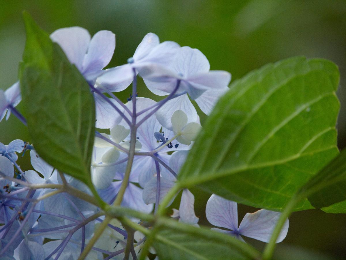 アップで、花を_c0036985_1917638.jpg