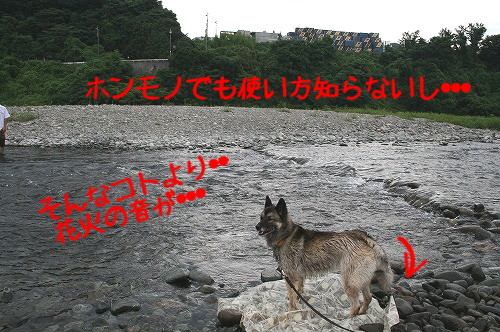 f0055395_2238587.jpg