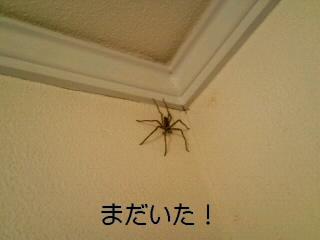 朝蜘蛛は縁起が良いというけれど_c0023399_1358268.jpg