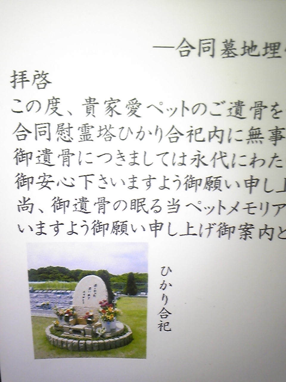 川崎のキジちゃん_b0189509_184120.jpg