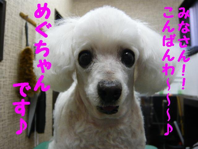 初のサロン!!&写真・・・_b0130018_1915380.jpg