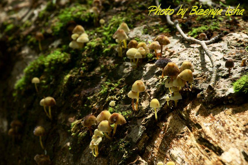 『森の小人たち』_d0086248_6363790.jpg