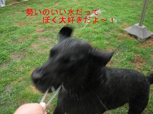 f0093459_15332894.jpg