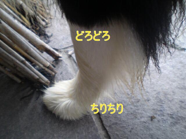 e0117976_21403839.jpg