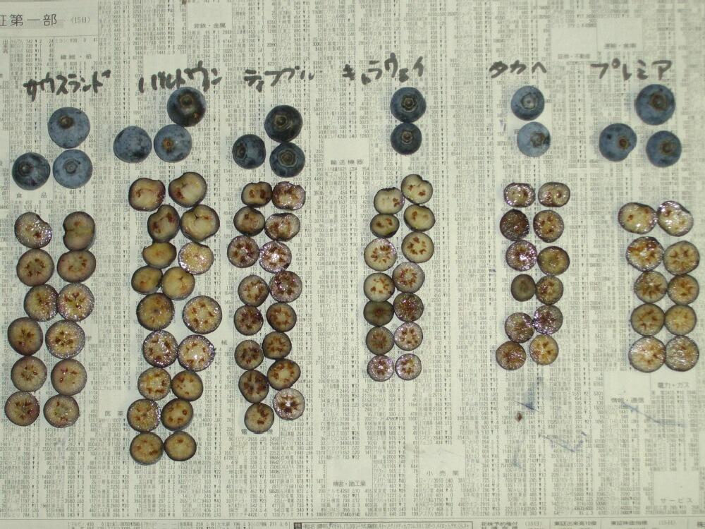 ラビットアイ系の果肉の色と種、中生>晩生_f0018078_1550381.jpg