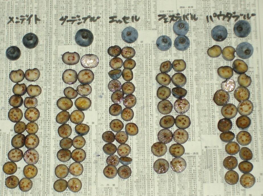 ラビットアイ系の果肉の色と種、中生>晩生_f0018078_15505597.jpg
