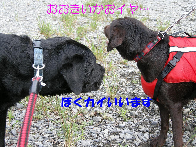 b0112998_20303348.jpg