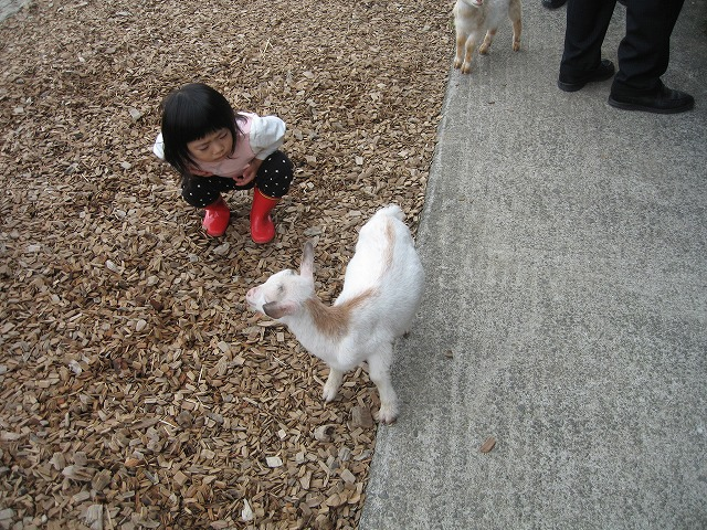 くるみと可愛い動物たち!!_f0202703_20415216.jpg