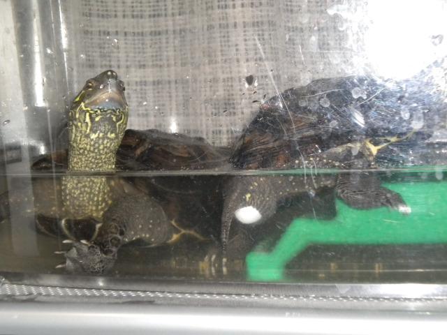 亀の産卵_e0150006_22205842.jpg