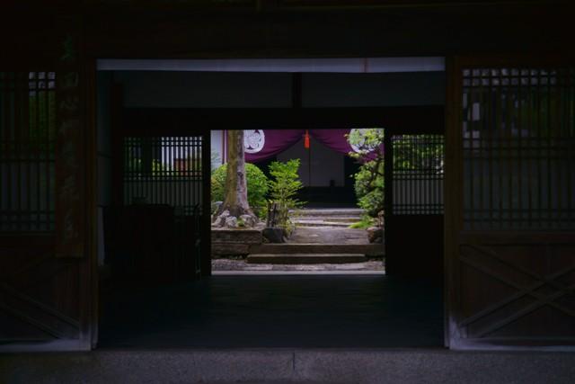 萬福寺の蓮2_e0177413_2236437.jpg