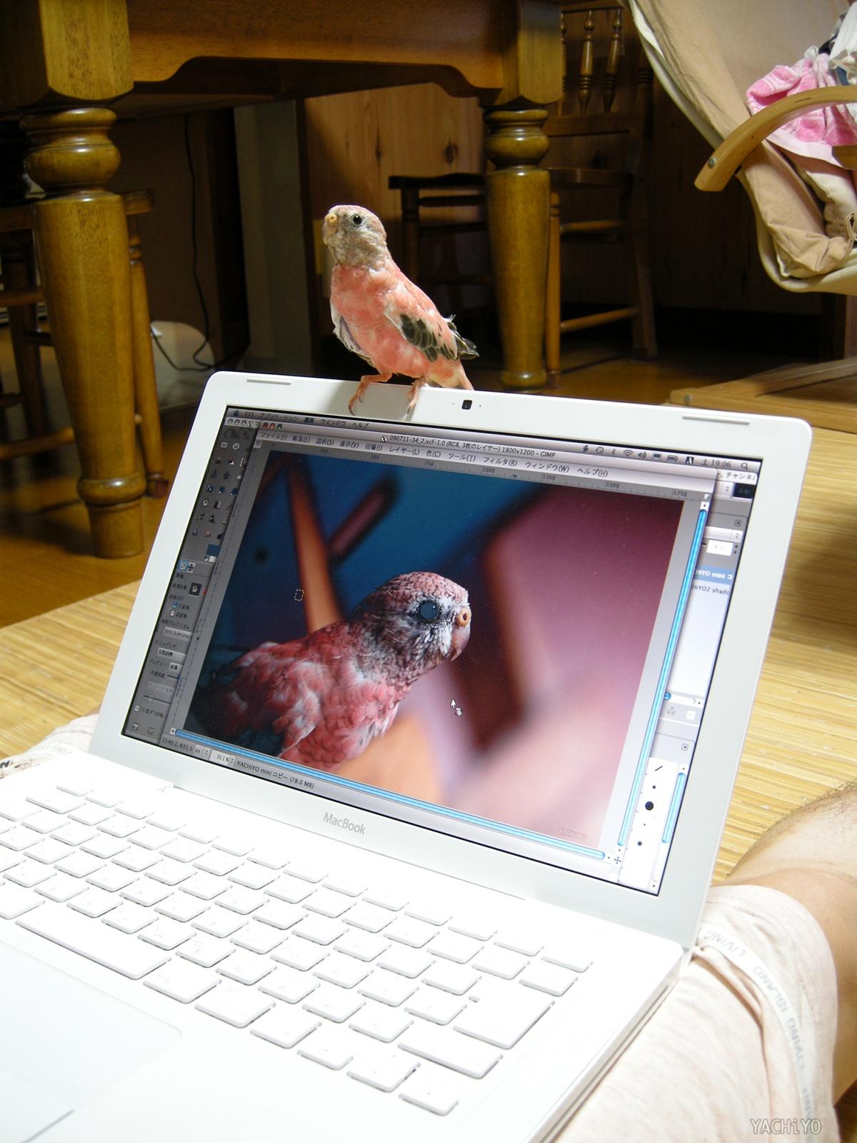 MacBook乗り_b0088514_23114220.jpg