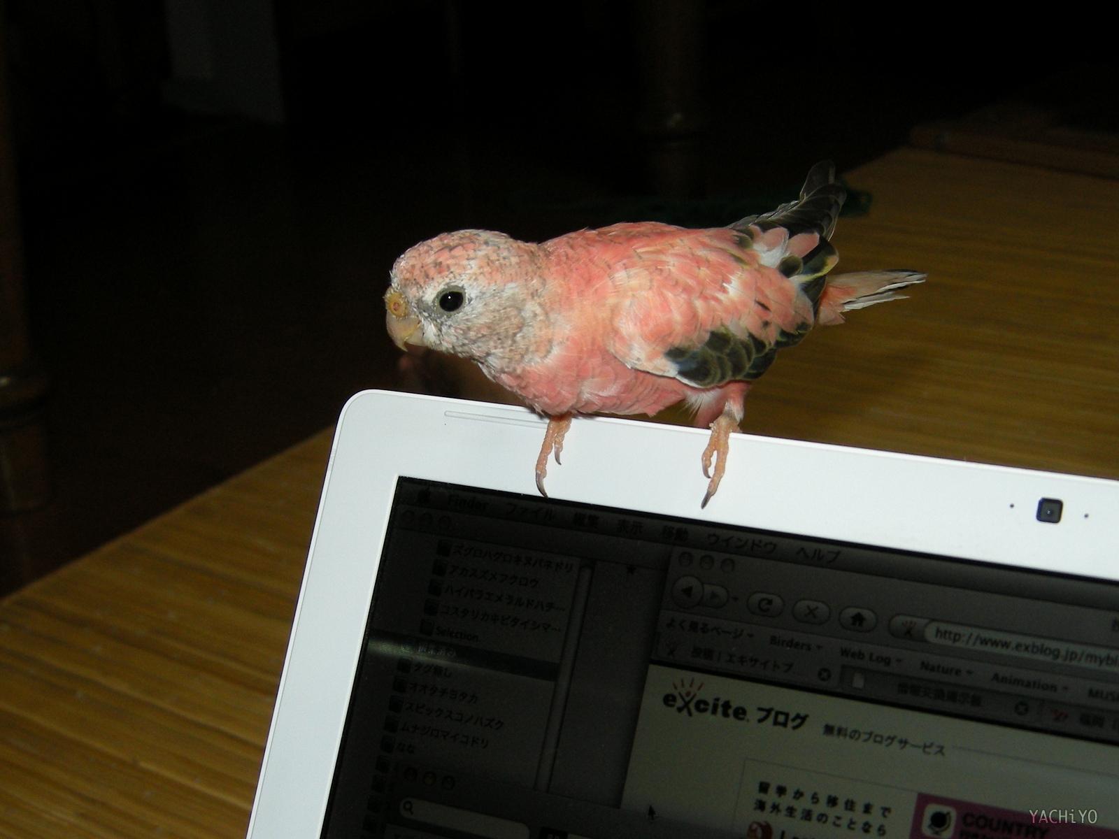 MacBook乗り_b0088514_2312335.jpg