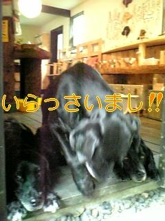 f0148927_15141498.jpg