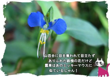 f0137096_1756142.jpg