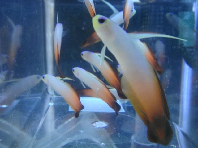 海水魚・サンゴ・水草・日本産淡水魚_f0189122_1371845.jpg