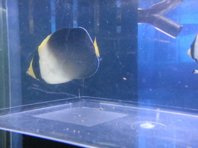 海水魚・サンゴ・水草・日本産淡水魚_f0189122_1391254.jpg