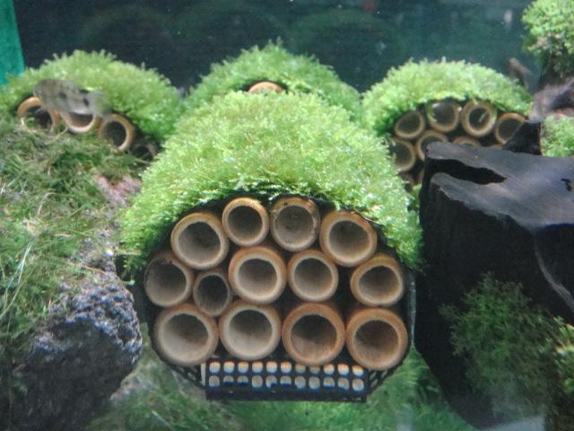 海水魚・サンゴ・水草・日本産淡水魚_f0189122_16541883.jpg