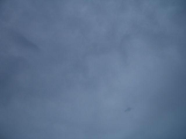 本日は・・・日食ですが・・・_f0207932_15213255.jpg
