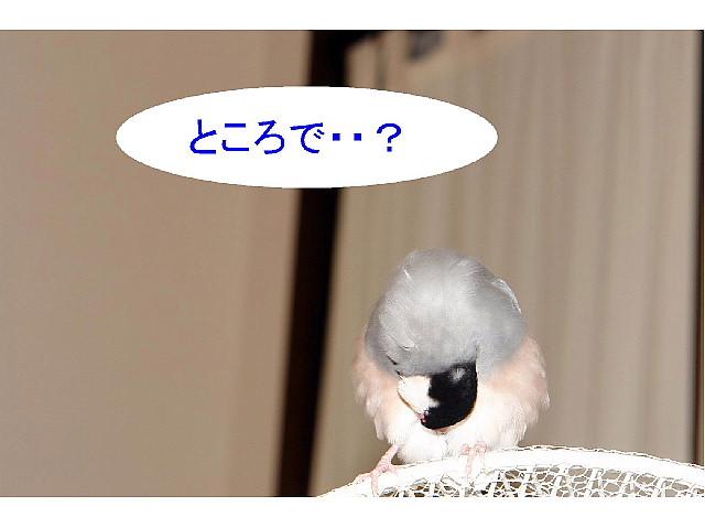 a0019545_16484937.jpg
