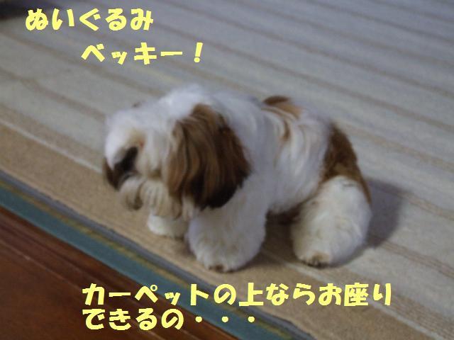 a0091448_239079.jpg