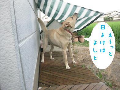 b0151748_13472040.jpg