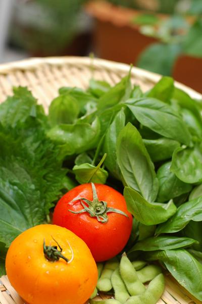 お庭の野菜_b0016049_1724937.jpg