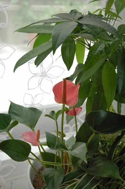 お庭の野菜_b0016049_17341950.jpg