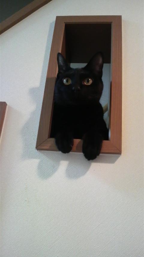 飾り窓の猫_c0185356_15292789.jpg