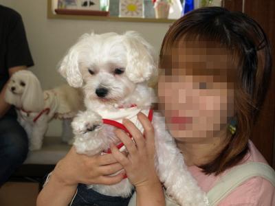3姉妹ちゃん、お兄ちゃんとご対面〜(^^)_b0001465_18301135.jpg