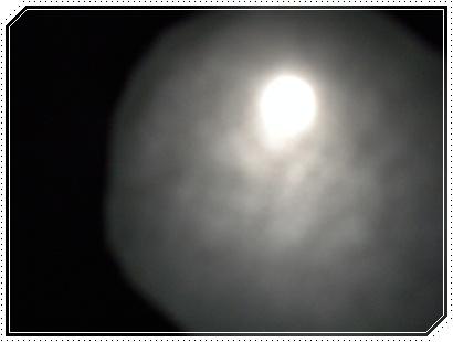 b0149071_1719934.jpg