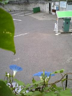 b0176676_1632032.jpg