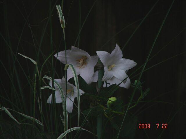 f0104277_859552.jpg