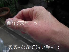 c0139488_0412270.jpg