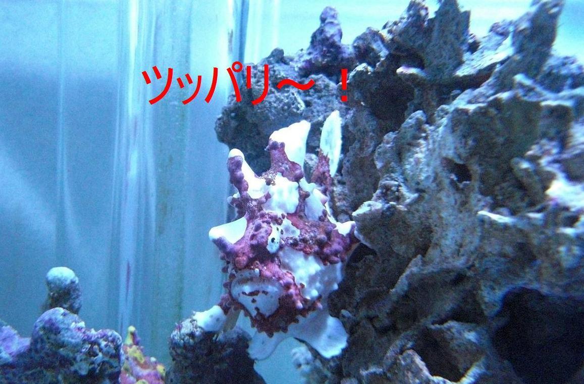 f0183020_2012080.jpg
