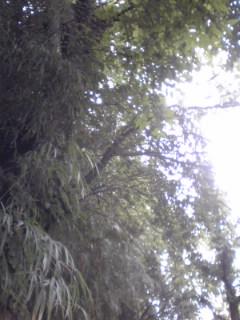 緑の屋根_a0126663_1748345.jpg
