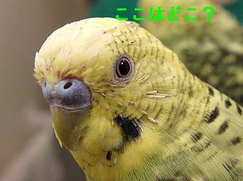 f0196665_09562.jpg