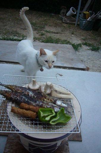 Japanese traditional BBQ._c0153966_2117054.jpg