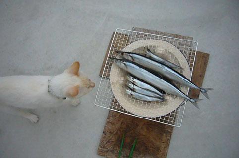 Japanese traditional BBQ._c0153966_216415.jpg